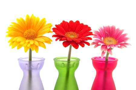 Row of colorful Gerber flowers in little glass vases photo