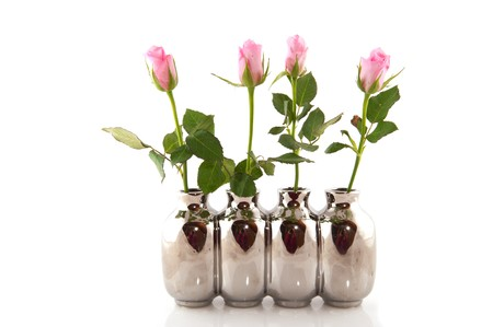 row pink roses in silver vases isolated over white Stock Photo - 7828488