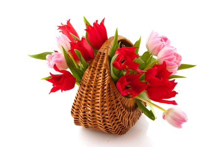 wicket: wicket cane basket with Bouquet of red and pink tulips isolated over white Stock Photo