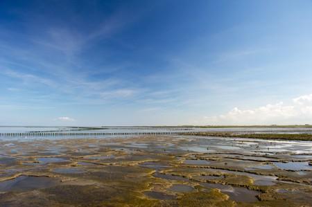 ebb: Mudflat podczas ebb w krajobraz holenderski wody