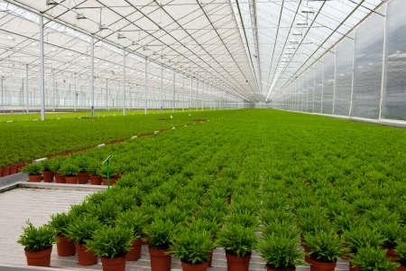Interior of a greenhouse with many Bamboo plants