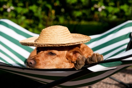 shade: Dog lazy on its own vacation bed with funny hat