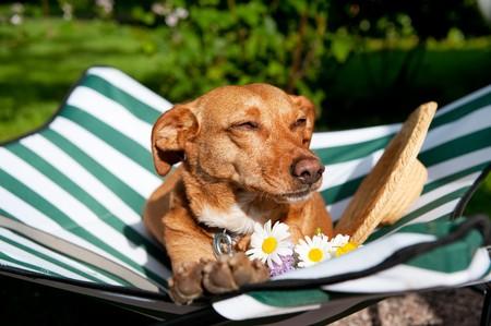 面白い帽子や花のベッドは犬それに怠惰です