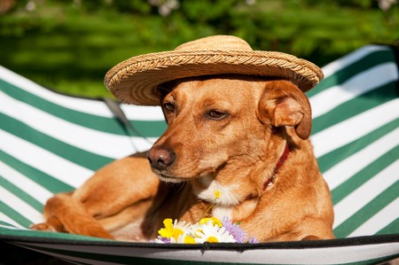 Dog lazy on its bed with funny hat and flowers photo
