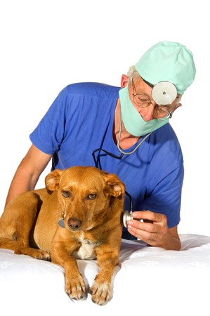 Dog for an examination by the veterinair photo