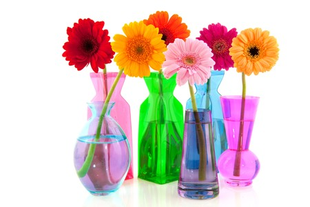 Colorful Gerber flowers in glass vases isolated over white background photo