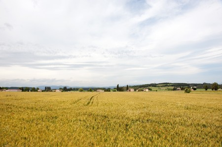 Agriculture landscape with corn fields in French Bourgogne photo