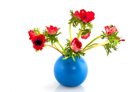 Bouquet of red Anemone flowers in blue vase photo