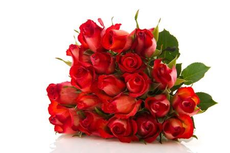 rosas rojas: Ramillete con veinte rosas rojas hermosos aislados sobre blanco
