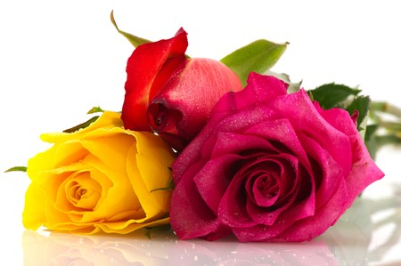 A row with colorful roses in red yellow and pink photo