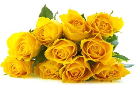 rosas amarillas: Ramillete con diez Rosas Amarillas hermosos aislados sobre blanco
