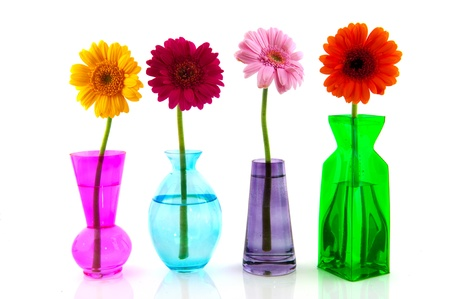 Row colorful Gerber flowers in little vases Stock Photo - 8454743