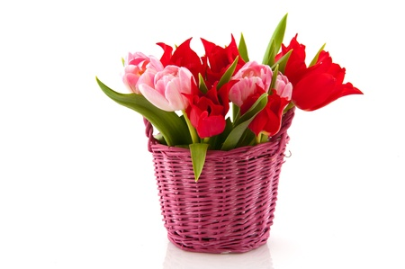 Pink basket with colorful tulips in spring photo