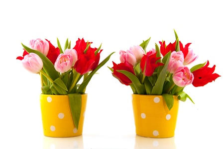Pink basket with colorful tulips in spring Stock Photo - 8454697