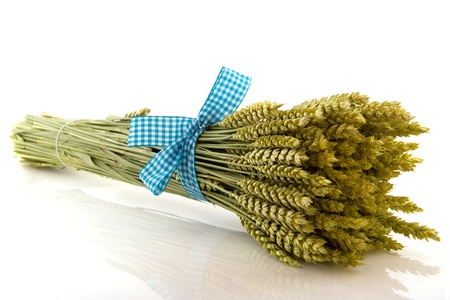 Bunch ripe wheat tied with checked ribbon isolated over white background photo