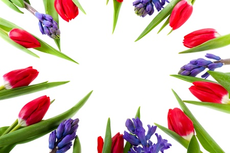 Spring flower frame with Hyacinths and red tulips photo