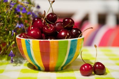 plucked: Fresh plucked cherries in the summer garden