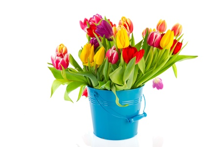 Bouquet colorful tulips in blue metal bucket isolated over white photo