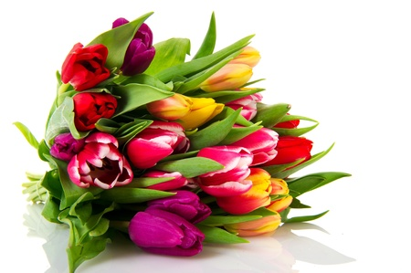 tulip flower: Various colored Dutch tulips isolated on white background