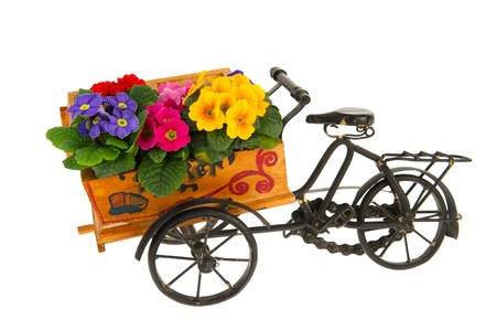 bringing: Bike for bringing the flowers from the flower shop