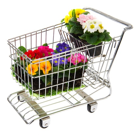 full shopping cart: shopping cart full with flowers and primroses Stock Photo