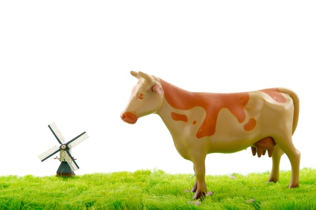 dutch cow in grass pastures with windmill at the horizon photo