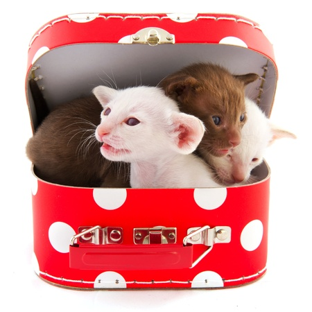 Open red dotted suitcase with cute little cats Stock Photo - 8991544