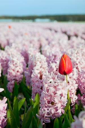 exception: Pink fields flowers with one red exception