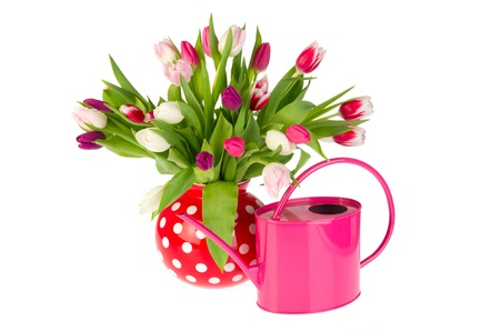 Colorful bouquet tulips in red spotted vase with pink watering can photo