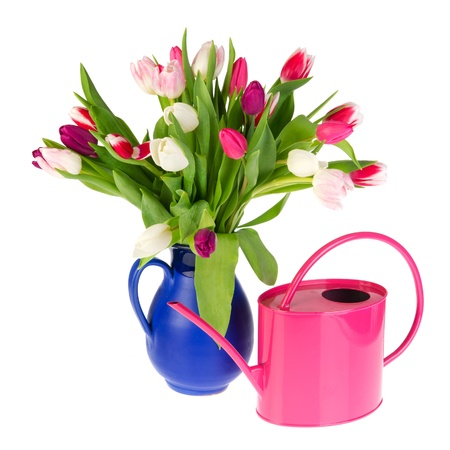 Colorful bouquet tulips in red spotted vase and pink watering can photo