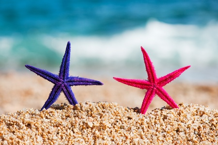 Standing starfishes in different colors at the beach photo