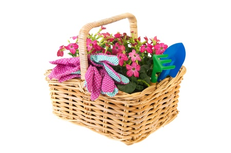 Pink Nicotiana flowers and gardening tools in basket isolated over white photo