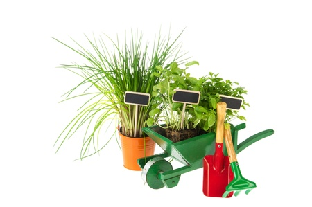 Kitchen herbs in the wheel barrow for making a garden photo
