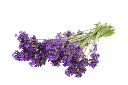 Purple bouquet Lavender flowers on white background photo