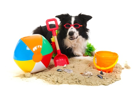 Portrait of a dog on vacation with garland and sunglasses Stock Photo