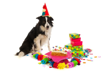 happy feast: Little Jack Russel is having a colorful birthday
