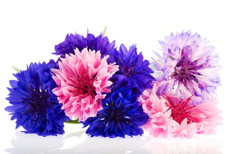 corn flower: Bouquet blue and pink Cornflowers isolated over white background Stock Photo