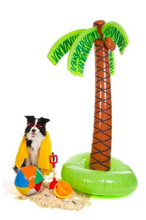 Portrait of a dog on vacation on a tropical beach photo