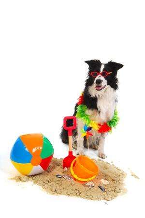 plastico pet: Retrato de un perro de vacaciones con garland y gafas de sol Foto de archivo
