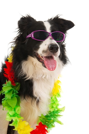 Dog on vacation with sunglasses and flower garland photo