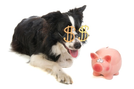 Portrait of a dog with dollar sunglasses and a piggy bank Stock Photo - 10010735