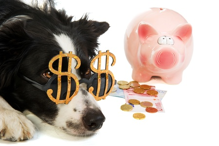 Portrait of a dog with dollar sunglasses and a piggy bank photo