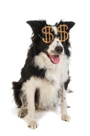black money: Portrait of a dog with dollar sunglasses