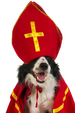 sinterklaas: Dog in the clothes from the Dutch Sinterklaas