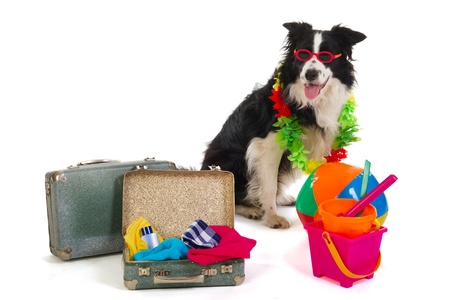Dog with sunglasses ready to travel for the summer vacation photo