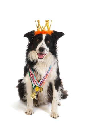 Champion dog with many medals and crown from the show photo