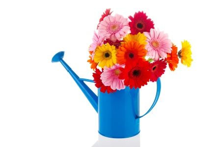 Blue metal watering can with a bouquet of flowers photo
