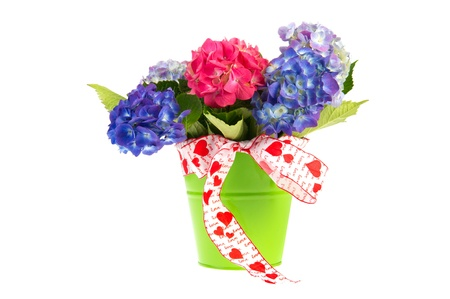 Birthday bouquet Hydrangea in blue and pink isolated over white background photo