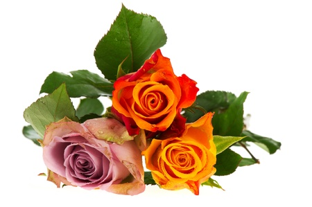 Colorful bouquet roses isolated over white background photo