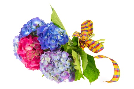 Bouquet Hydrangea in blue and pink isolated over white background Stock Photo - 10876644
